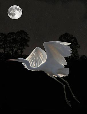 Mixed Media - Great Egret In Flight by Eric Kempson