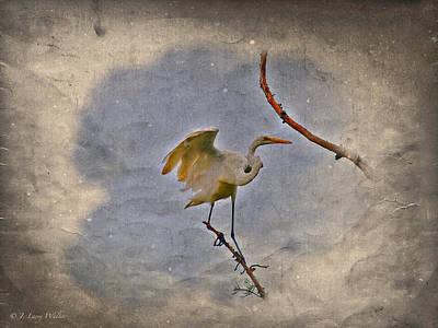Digital Art - Great Egret Landing by J Larry Walker