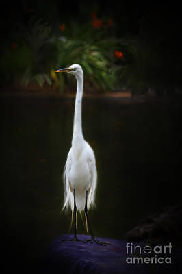 Digital Art - Great Egret by Lisa Redfern