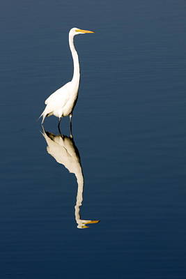 Great Egret Reflected Art Print by Sally Weigand