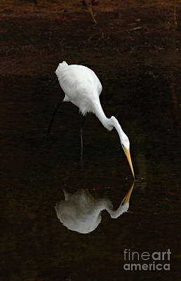 Great Egret Reflection Art Print by Bob Christopher