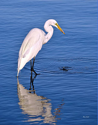 Great Egret With Shrimp Art Print
