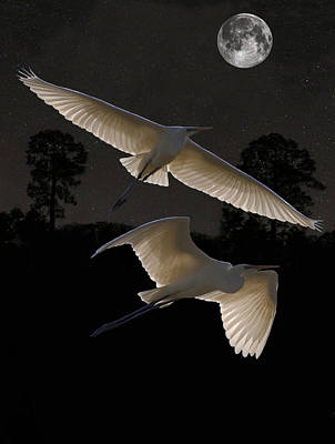 Great Egrets In Flight Art Print by Eric Kempson