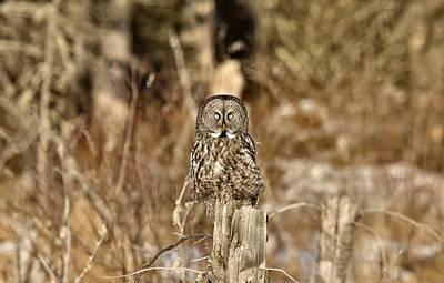 Yellow Beak Digital Art - Great Gray Owl by Mark Duffy