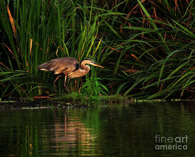 Art Print featuring the photograph Great Heron by Deborah Smith