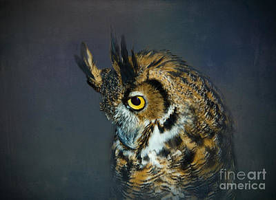 Preditor Photograph - Great Horned Owl by Betty LaRue