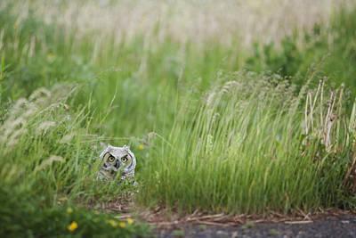 Great Horned Owl Bubo Virginianus Art Print by Susan Dykstra