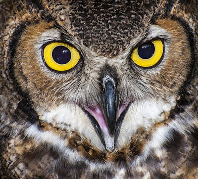 Great Horned Owl Close Up Art Print by Ray Downs