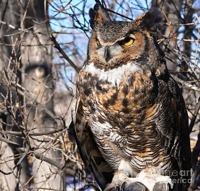 Photograph - Great Horned Owl by Harry Strharsky