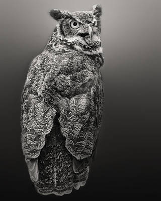 Photograph - Great Horned Owl In Black And White by Peg Runyan