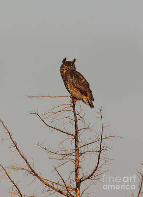 Wise Owl Photograph - Great Horned Owl by Robert Frederick