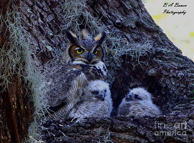 Photograph - Great Horned Owl Twins by Barbara Bowen