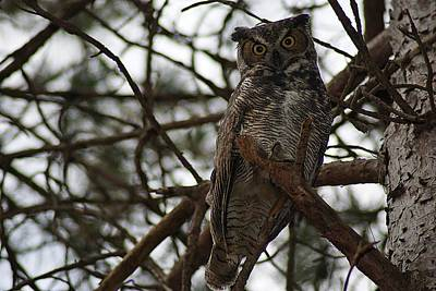 Photograph - Great Horned Owl V by Joe Faherty