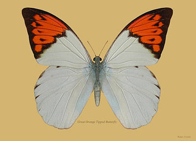 Digital Art - Great Orange Tipped Butterfly by Walter Colvin