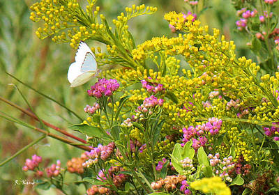 Photograph - Great Southern White Butterfly Likes The Pink Flowers by Roena King