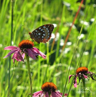 Photograph - Great Spangled Fritillary by Marilyn Smith