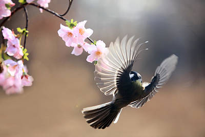 Y120831 Photograph - Great Tit by By Giseong Na
