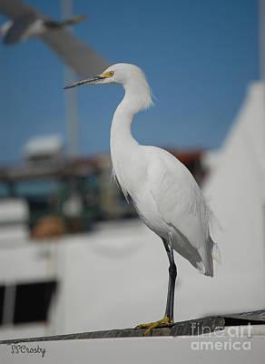 Great White Egret 2 Art Print