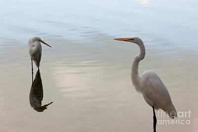 Great White Heron Photograph - Great White Heron  by Keith Kapple
