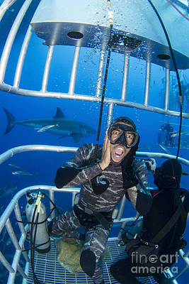 Cage Diving Photograph - Great White Shark Behind Frightened by Todd Winner