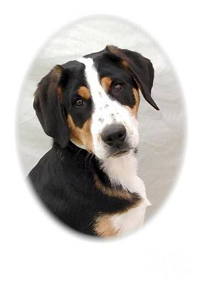 Greater Swiss Mountain Dog 1255 Art Print