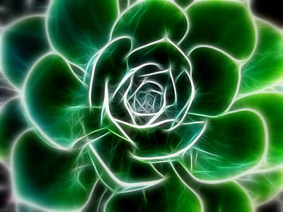 Photograph - Green Aeonium Cactus by Cindy Wright