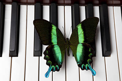 Piano Photograph - Green And Black Butterfly On Piano Keys by Garry Gay