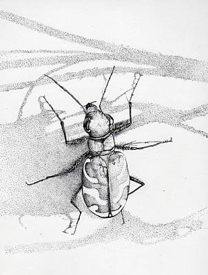Drawing - Green Andyellow Beetle by Inger Hutton