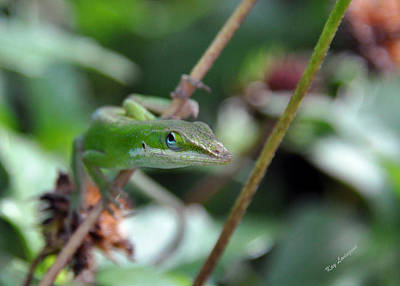 Green Anole Art Print