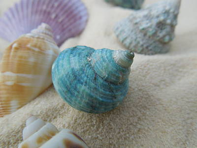 Green-blue Shell In The Sand Art Print by Chad and Stacey Hall