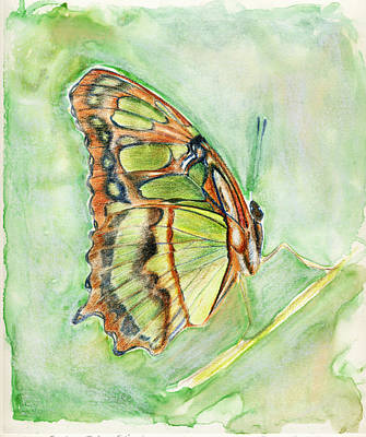 Painting - Green Butterfly by Linda Pope