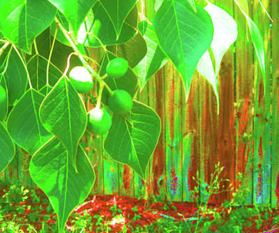 Green Curtain Art Print by Juliana  Blessington