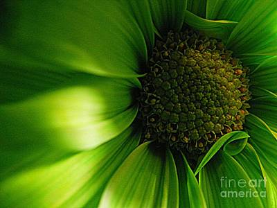 Art Print featuring the photograph Green Daisy by Robin Dickinson