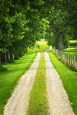 Path Photograph - Green Farm Road by Elena Elisseeva