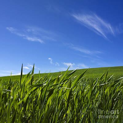 Green Field Of Wheat Art Print by Bernard Jaubert