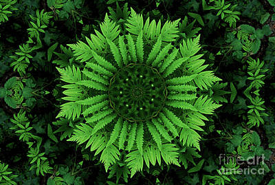 Photograph - Green Forest Ferns Mandala - 2 by Renata Ratajczyk