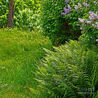 Photograph - Green Garden by Lutz Baar