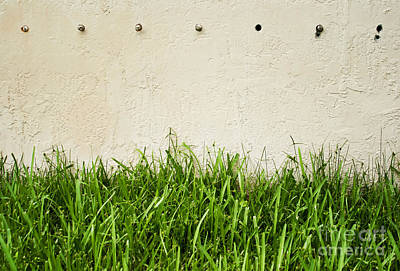 Home Decoration Photograph - Green Grass Against Wall by Blink Images