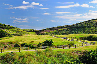 Y120831 Photograph - Green Grassland by Frank Chen