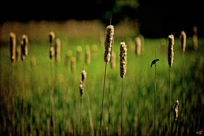 Photograph - Green Grow The Rushes O by Chris Lord