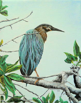 Painting - Green Heron by Sharon Tabor
