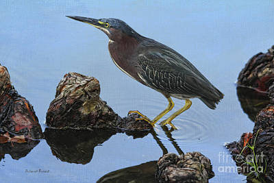 Green Heron Visiting The Pond Art Print by Deborah Benoit
