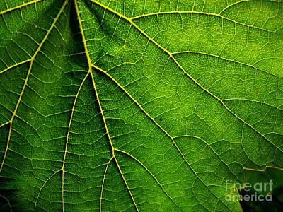 Photograph - Green by Eena Bo