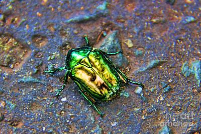 Blue Fig Photograph - Green Junebug by Mariola Bitner