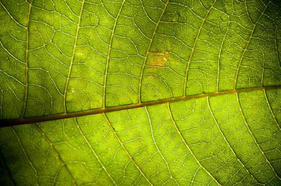 Green Leaf Background Art Print by Maratsavalai Lertsirivilai