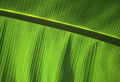 Green Leaf, Close-up Art Print by Axiom Photographic