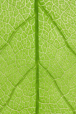 Y120817 Photograph - Green Leaf by Jacky Lee