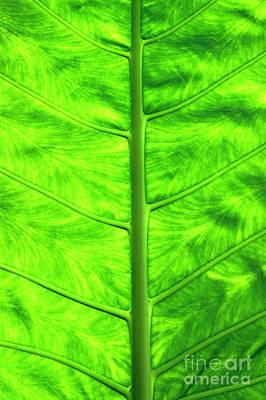 Green Leaf Art Print by Sami Sarkis