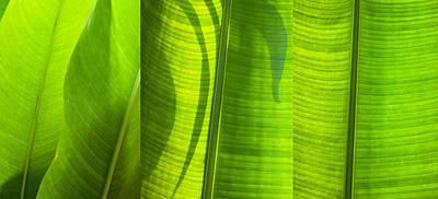 Life Line Photograph - Green Leaf by Setsiri Silapasuwanchai