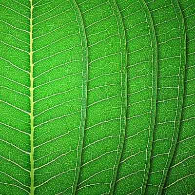 Green Leaf Texture Art Print by Natthawut Punyosaeng